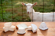 8 OCT. 2015 -- BLOOMSDALE, Mo. -- Award-winning Baetje Farms LLC goat cheeses, including Fleur de la Vallee (left), Amoureux, Miette, Coeur du Clos and Bloomsdale, are displayed on a table at the farm in Bloomsdale, Mo., Thursday, Oct. 8, 2015. Goat cheeses made at the farm by owners Steve and Veronica Baetje and their staff have won major national awards and the respect of cheese aficionados across the country. Photo © copyright 2015 Sid Hastings.