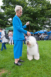 © Licensed to London News Pictures. 18/08/2018. Llanelwedd, Powys, UK. An Old English Sheepdog waits for it's event on the second day of The Welsh Kennel Club Dog Show, held at the Royal Welsh Showground, Llanelwedd in Powys, Wales, UK. Photo credit: Graham M. Lawrence/LNP