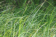Nature provides beautiful images in almost every direction, as evidenced by the simplicity of the shore grass growing near a Minnesota lake.