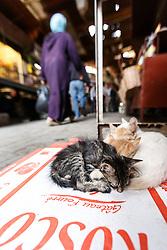 Cats sleeping on box, Fes al Bali medina, Fes, Morocco