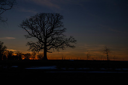 A mighty oak tree stands against a stark late winter sky west of Funks Grove Timber in McLean County IL