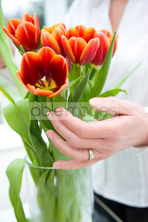 Close up of a woman hands arranging a bunch of tulips