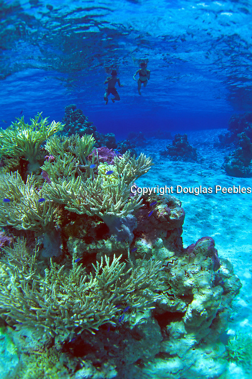 Snorleling, French Polynesia<br />