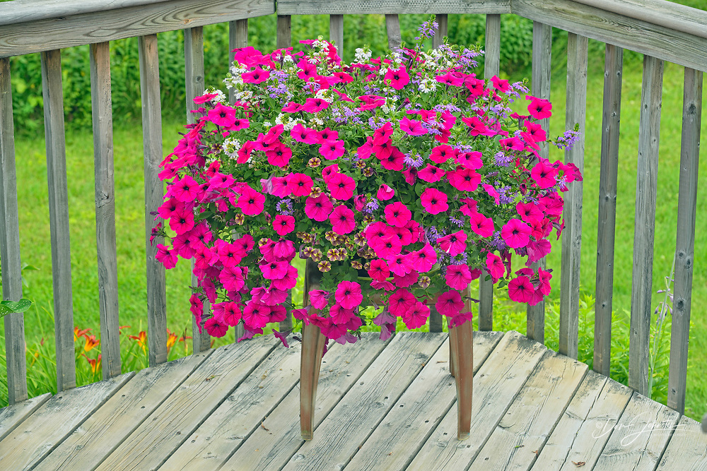 Summer flowers in display pots, Greater Sudbury, Ontario, Canada