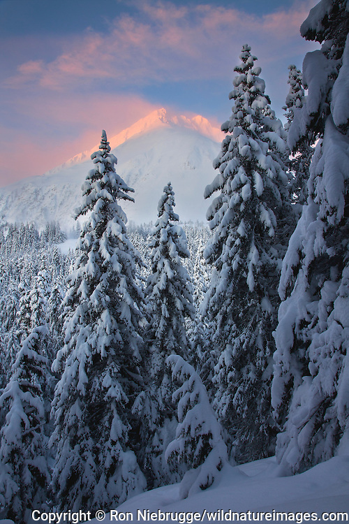 From the Lost Lake Trail in the winter, Chugach National Forest, Alaska.