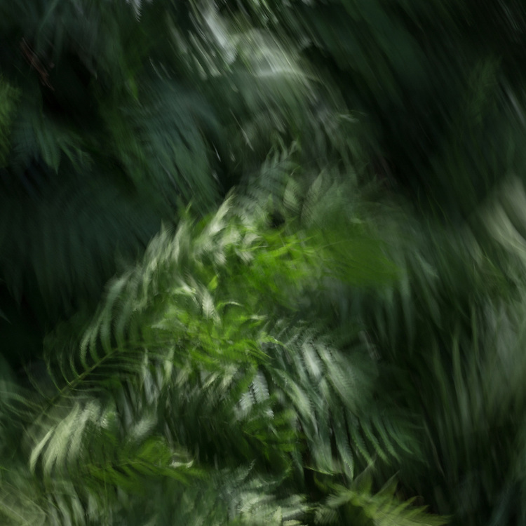 Ferns and a breeze on a summer day rendered with intentional camera movement.