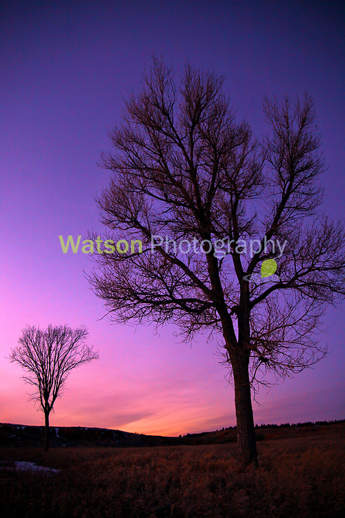 Two Trees at Twilight