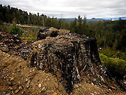 Burned tree stump in clearcut, Tasmania, between Florentine Valley and Mount Wedge. Areas like this coupe are clearcut by Forestry Tasmania and its contractors then burned and poisoned before being left like this to regrow. ....Forest activists in Tasmania maintain that the government's forestry policy is destroying the environment and that 90% of Tasmania's old growth forest is already gone.