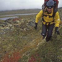 HIKING, Hiking in the Logan Mts., Yukon Territory, Canada