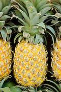 A pile of fresh, ripe Pineapple