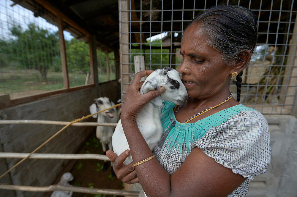 Annaletchumi Velayutham holds a goat in the village of Karadianaru, Sri Lanka. She and her husband were displaced during Sri Lanka's bloody civil war, and when they moved back home after the fighting ended, a church group loaned them two goats. Three years later, they have over 30, and they've sold several goats to finance the expansion of their simple house and buy better seeds for their farm fields. They've also paid the loan off.