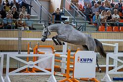 053, Nikky Vera<br /> KWPN Kampioenschappen 2021<br /> Ermelo <br /> © Hippo Foto - Dirk Caremans<br /> 13/08/2021