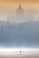 © Licensed to London News Pictures. 01/03/2021. Castle Howard UK. A swan swims across the Great Lake on the Castle Howard estate as the 18th Century home is shrouded in fog this morning in Yorkshire. Photo credit: Andrew McCaren/LNP