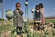 Afghan children watch Afghan villagers and the policemen destroy the poppy field as part of the drug eradication campaign in a village near Jalalabad, Afghanistan on Monday, April 23, 2007. The provincial government of Nangarhar began drug eradication program since early this year, aiming to eradicate 100% of the illegal poppy fields.