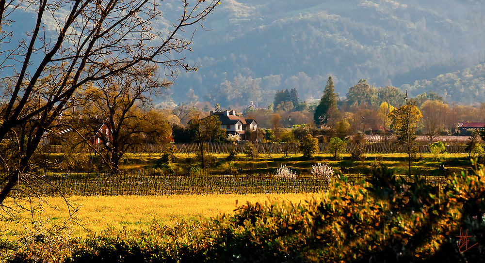 SUBJECT: Napa Vinyard IMAGE: With a backdrop of hills, vinyards, brush and trees bask in the late afternoon sunlight, radiating the yellow and reddish tones of early evening.