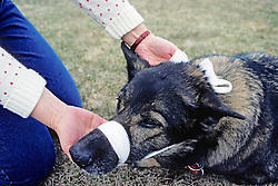 Tying Dogs Mouth