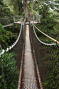 Canopy Walkway<br /> Atta Lodge<br /> Iwokrama Forest Reserve<br /> GUYANA<br /> South America