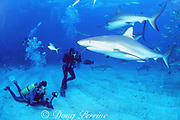 underwater photographers with Caribbean reef and blacktip sharks, Carcharhinus perezi and Carcharhinus limbatus (note research tag on closest shark), Shark Rodeo, Walker's Cay, Bahamas (Atlantic)