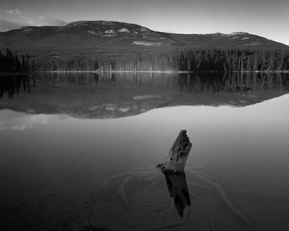 A stump near the shore of Chadburn Lake