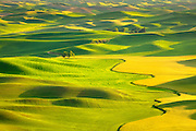Green pastels in Washington's Palouse region.