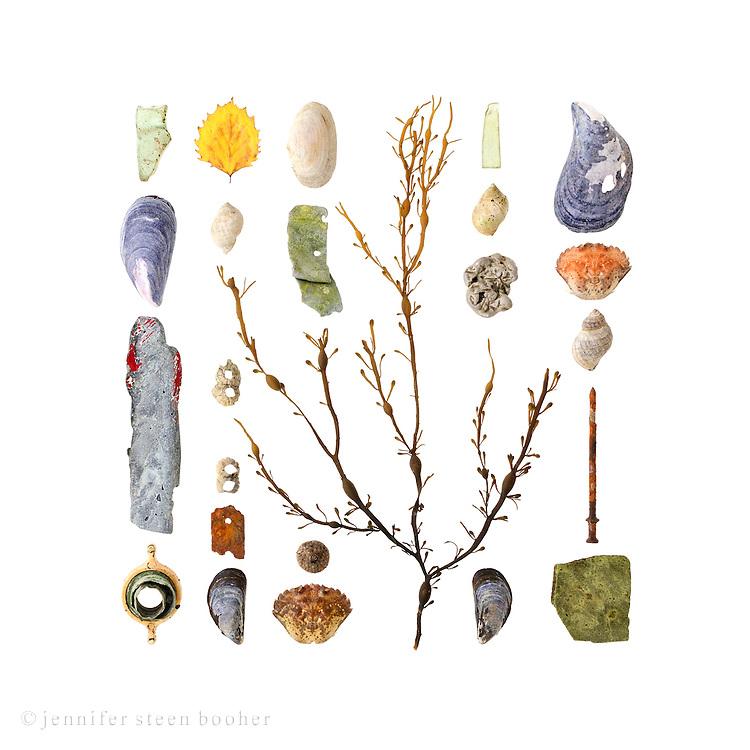 From left to right, top to bottom: <br /> Row 1: Sea glass, Blue Mussel (Mytilus edulis), plastic fragment, hose bib<br /> Row 2: poplar leaf (Populus grandidentata), Dog Whelk (Nucella lapillus), Northern Rock Barnacles (Semibalanus balanoides), rusted metal, , Blue Mussel<br /> Row 3: Soft Shell Clam (Mya arenaria), metal fragment, acorn cap, European Green Crab (Carcinus maenas)<br /> Row 4: Knotted Wrack (Ascophyllum nodosum)<br /> Row 5: sea glass, Dog Whelk, aluminum blob, Blue Mussel,<br /> Row 6: Blue Mussel, Green Crab, Dog Whelk, rusted nail, ceramic fragment