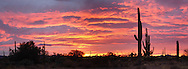 Photos from Saguaro National Park west A sunset in southern Arizona near Tucson