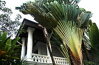 Traveller's Tree or Travellers Palm is a species of banana plant though not a true palm but a member of the bird-of-paradise family.  It is called the travellers palm because the stems hold rainwater that can be used as an emergency source of water.
