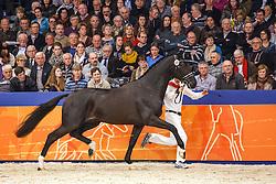 606 - Gregor<br /> KWPN Stallion Selection - 's Hertogenbosch 2014<br /> © Dirk Caremans