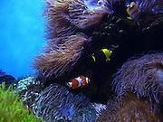 Waikiki Aquarium, Honolulu, Oahu, Hawaii