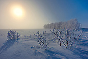 Hoarfrost covered shelterebelt trees and shrubs at sunrise<br />Dugald<br />Manitoba<br />Canada