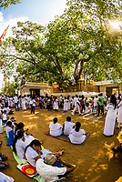 Sri Maha Bodhi, the sacred bodhi tree.<br /> Anuradhapura, North Central, Sri Lanka
