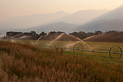 Massed sprinkler irrigation systems water the Alfalfa fields as the sun streams over the edge and casts a shadow down the mountainside of Mount Cowen at sunrise. Dawn in Paradise Valley, near Livingstone, Montana can be a spectacular event as the valley floor lights up a fresh day. Grassland comes to life and ranches start working. Alfalfa can produce up to 2 or sometimes 4 crops per year from the same field providing hay for livestock.