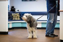 Pet dog arrived at Rushcliffe Veterinary Centre, West Bridgford, Nottingham, UK.<br /> Photo: Ed Maynard<br /> 07976 239803<br /> www.edmaynard.com