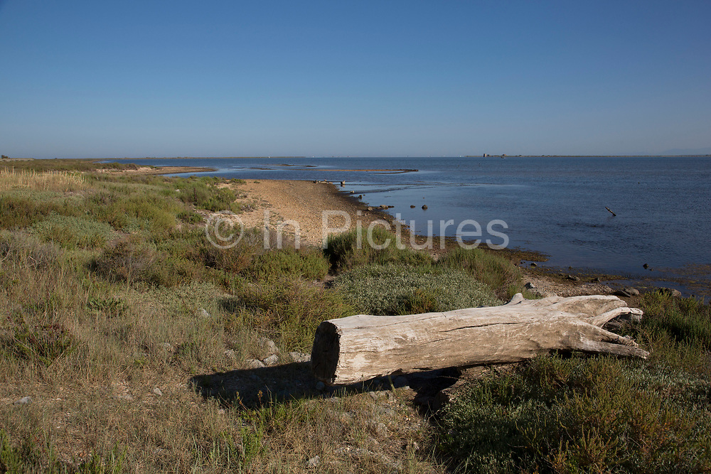 Dead tree trunk by the sea at Gruissan, Languedoc-Roussillon, France.