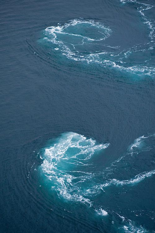 The fastest current, malstroem, in the world - Saltstraumen<br /> Atlantic marine life, Saltstraumen, Bodö, Norway