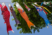 Families with boys hang colorful carp kites, called Koinobori, outside their houses - one for each boy, with the biggest representing the oldest boy at the top. The kites flutter in the wind and look beautiful, as you can see in the photo above! In Japanese culture, the carp (or koi) represents courage and perseverance, as the fish is known for its strength and determination as it swims against the current upstream. The carp kite symbolises each family's wish for their sons to grow up brave and strong.