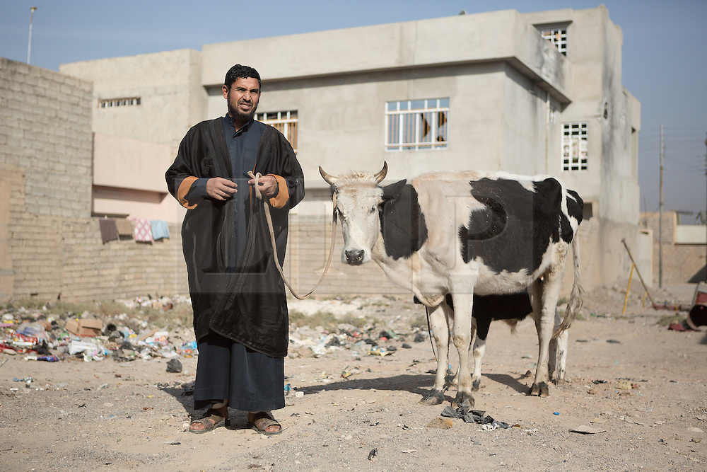 Licensed to London News Pictures. 11/11/2016. Mosul, Iraq. A Mosul resident stands with his cow during a visit by soldiers, belonging to the Iraqi Army's 9th Armoured Division, to the city's Al Inisar district on the south east of the city. The Al Intisar district was taken four days ago by Iraqi Security Forces (ISF) and, despite its proximity to ongoing fighting between ISF and ISIS militants, many residents still live in the settlement without regular power and water and with dwindling food supplies.<br /> <br /> The battle to retake Mosul, which fell June 2014, started on the 16th of October 2016 with Iraqi Security Forces eventually reaching the city on the 1st of November. Since then elements of the Iraq Army and Police have succeeded in pushing into the city and retaking several neighbourhoods allowing civilians living there to be evacuated - though many more remain trapped within Mosul.  Photo credit: Matt Cetti-Roberts/LNP
