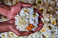 Inde, Rajasthan, Jaipur, le marché aux fleurs // India, Rajasthan, Jaipur, flower market