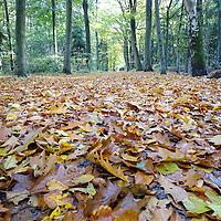 Herfst in Friesland