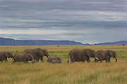 Elephant family, Serengeti National Park.