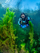 Scuba diver with the green algae at Dutch Springs, Scuba Diving Resort in Pennsylvania