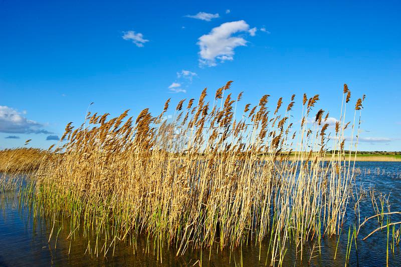 Reserva Natural Laguna de agua salada de Pétrola. Pétrola. Albacete ©Antonio Real Hurtado / PILAR REVILLA