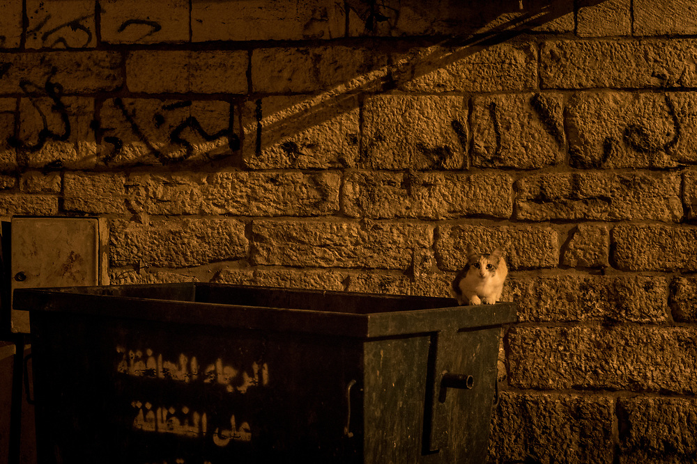 Cats at night, Bethlehem, Palestine