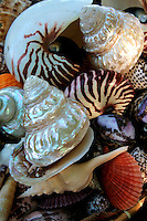Any diving hot spot in the Philippines is sure to have seashell vendors prowling around, ready to sell a vast array of colorful seashells in case the diver was not able to pick up any gems during his or her dive.