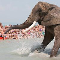 Elephant bath in Balaton