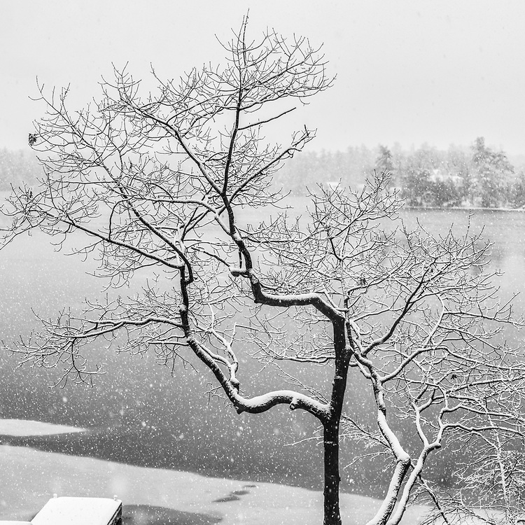 https://Duncan.co/tree-in-the-snow-above-the-river