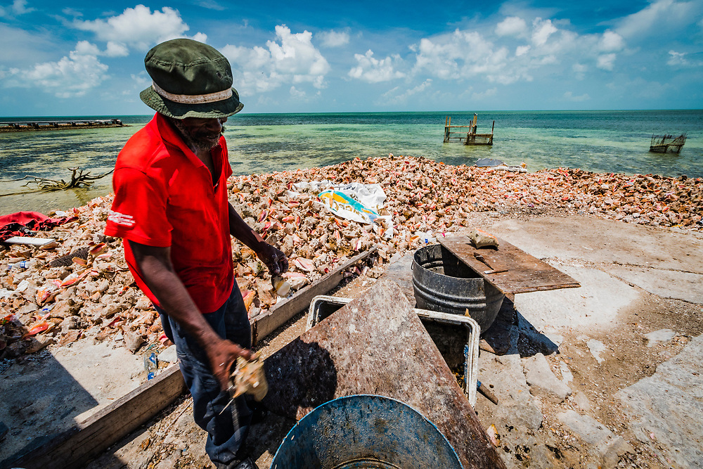 A man removes another conch from his or her shell before thowing the shell on the massive pile (called a midden) in West End, Grand Bahama. The man said he used to dive for conch, but now he only cleans them. He's been doing this job for decades.
