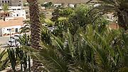 Green oasis vegetation in village of Betancuria, Fuerteventura, Canary Islands, Spain