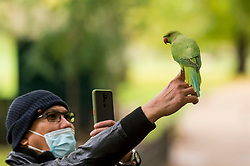 © Licensed to London News Pictures. 14/10/2020. LONDON, UK. A man wearing a facemask feeds a feral ring-necked parakeet in St. James's Park.  This species is now widespread across the capital and as their south Asian native range extends into the foothills of the Himalayas, they are unperturbed by mild English winters but will accept any food handouts if they can.  Photo credit: Stephen Chung/LNP