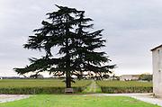 Vineyard and tree. Chateau Nairac, Barsac, Sauternes, Bordeaux, France